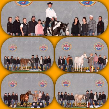 CM Performance & Halter Horses - Rich & Chris Miller